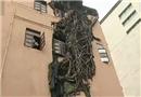 大树穿墙倔强生长